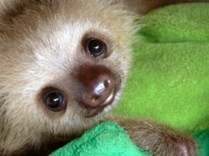 slothy1
